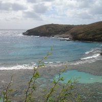 snorkeling hawaii-- forget place developed sunken volcano
