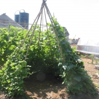 make backyard garden teepee